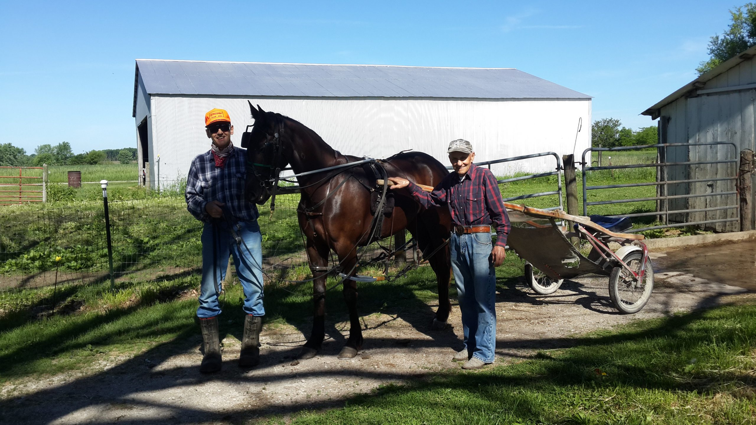 Raising Race Horses in Vermilion County