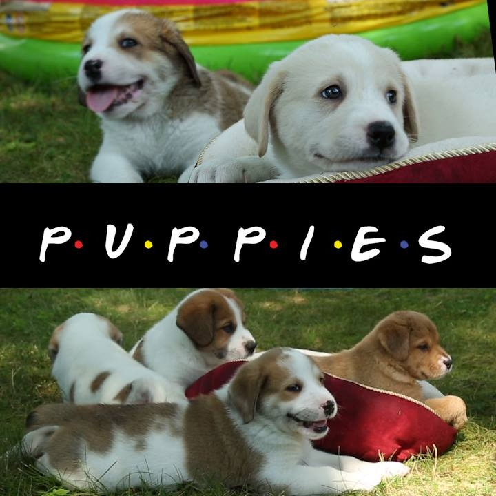 "the ""Friends"" as Puppies..."