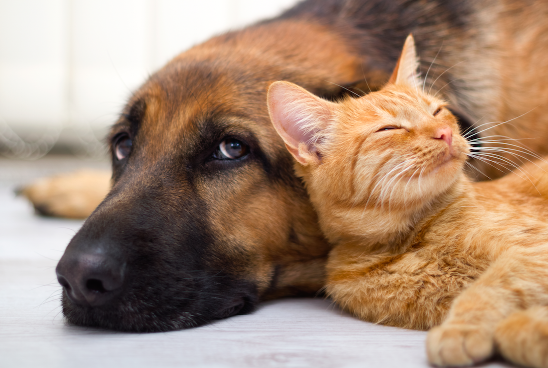 Good For You - Pets Are Good For Your Health