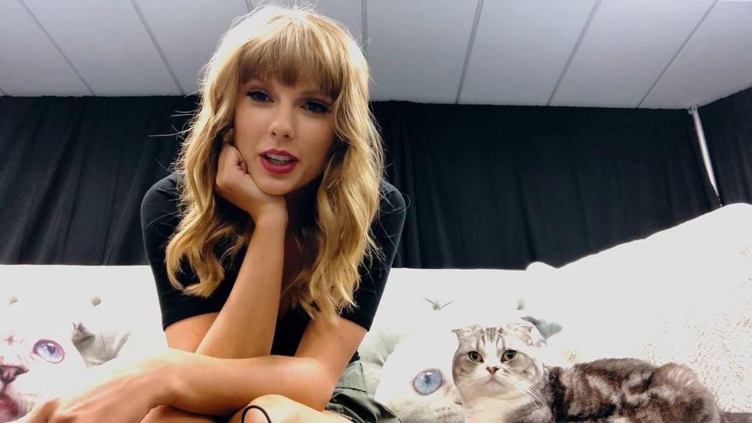 Taylor's cat