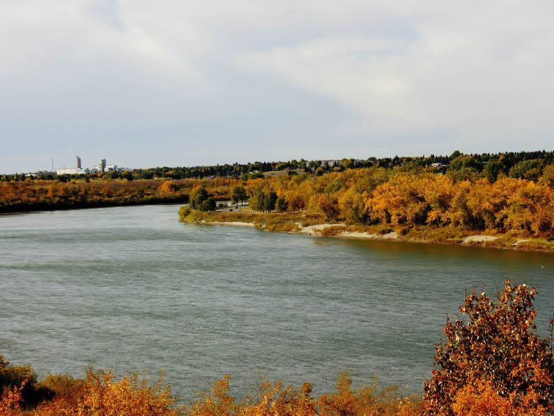 Invasive Plant Takes Root in Saskatchewan Waters