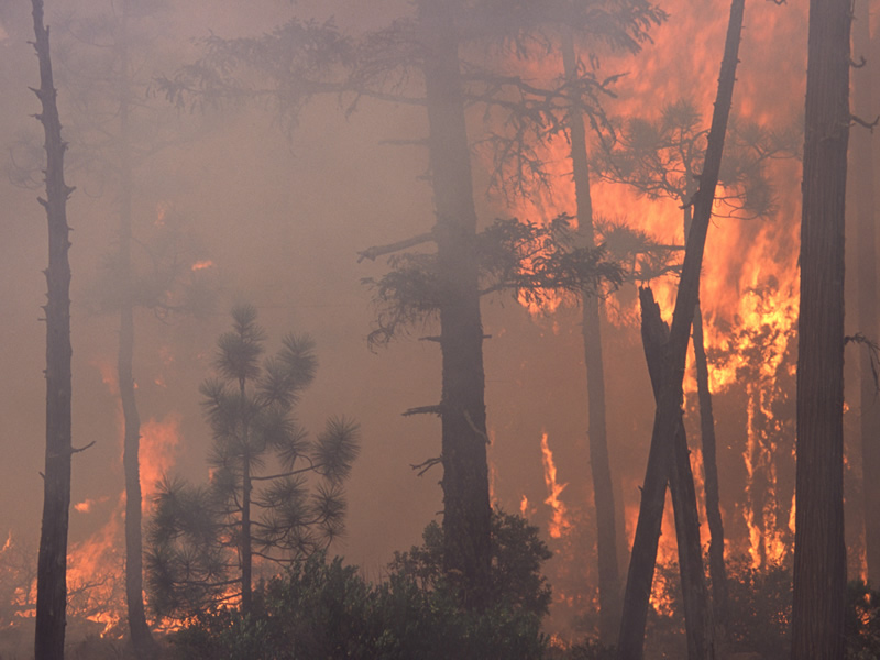 Wildfire Task Force Releases Interim Report