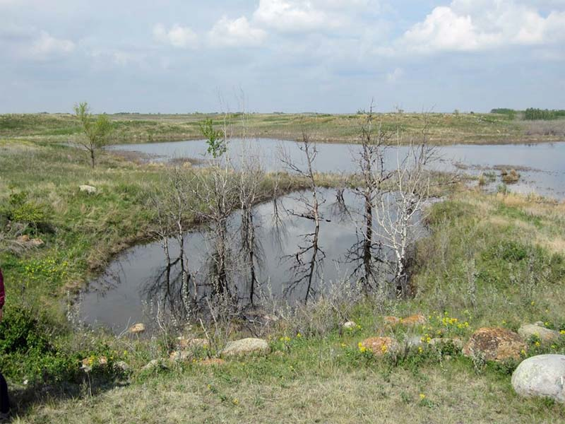 Efforts To Protect Northeast Swale While Building Around It
