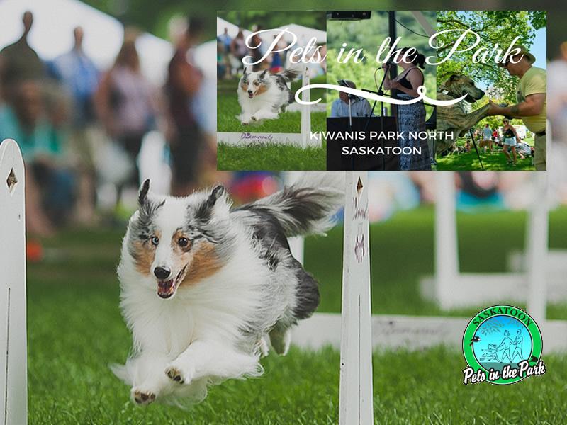 Pets Invade The Park