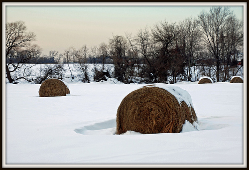 Hay Supply Shrinking
