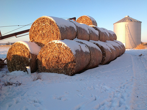 Buying Extra Hay As Winter Drags On