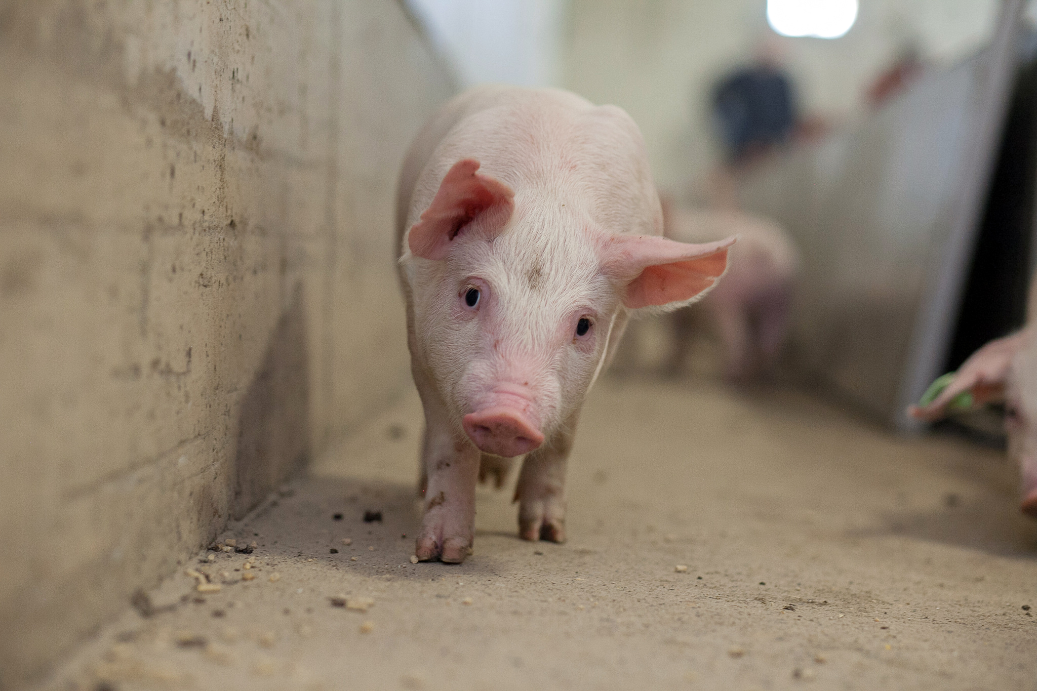 New High Tech Tools For Water and Swine Research at University of Saskatchewan