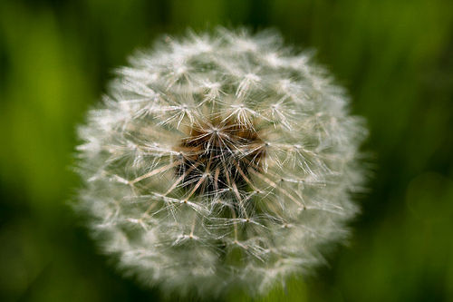 Allergy Season is Upon Us