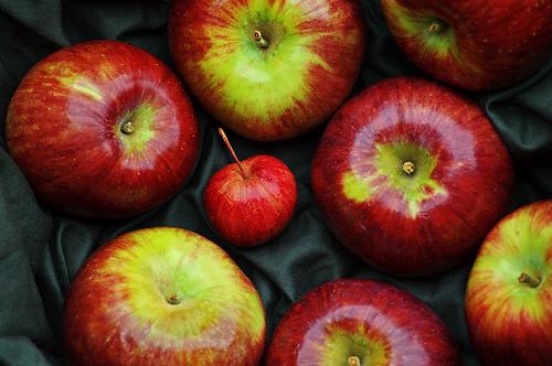 10 Schools Across Saskatchewan Receive 10 Thousand Dollars for Nutrition Projects