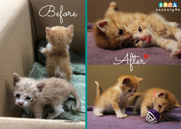 SPCA Finds Kittens Abandoned on Door Step