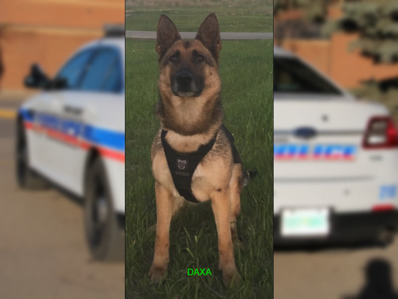 Charges After Police Dog Team Allegedly Assaulted