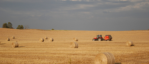 Crops Developing Quickly--Hay Yields Disappointing