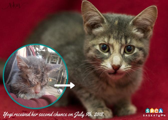 Tortured Kitten - Rescued