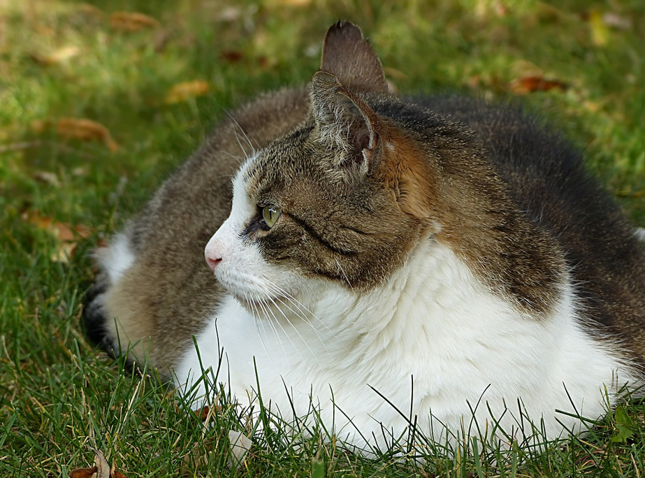 Overweight Pets Seem to be on the Rise in Urban Centres