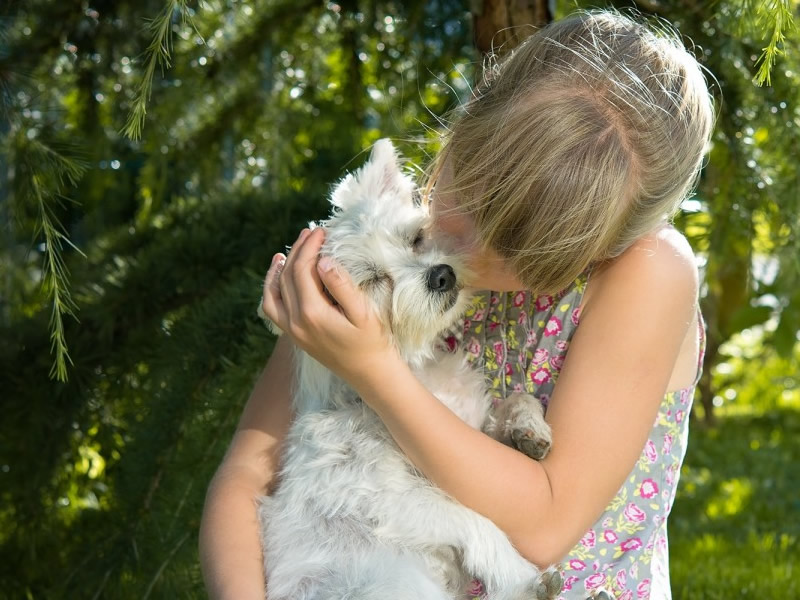 Looking For Animal Safekeeping Options in Domestic Abuse Situations