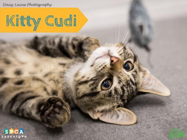 Kitty Cudi