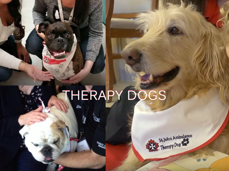 Therapy Dogs Were Part Of Emergency Response To Humboldt Bus Crash
