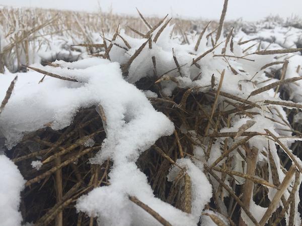 More Cold Temperatures Ahead