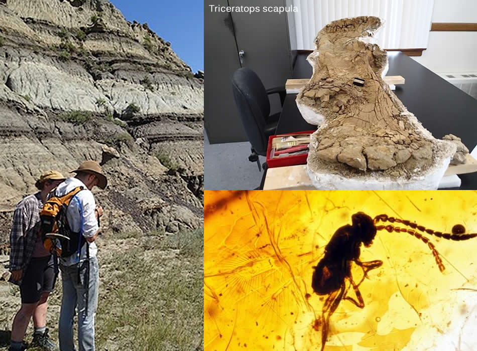 Fossil Discoveries In Saskatchewan