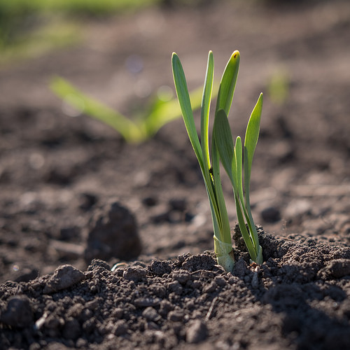 Soil Researchers Propose a New Soil Due to Human Activity