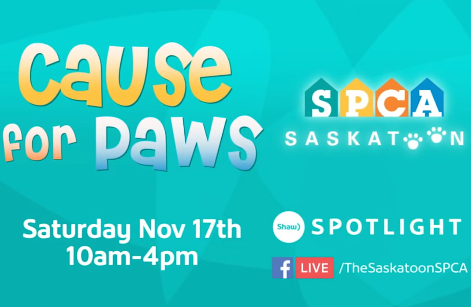 Cause for Paws Telethon Taking Place Saturday