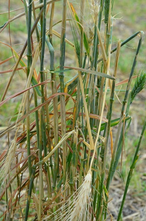 Average Crop Hail Year In Saskatchewan