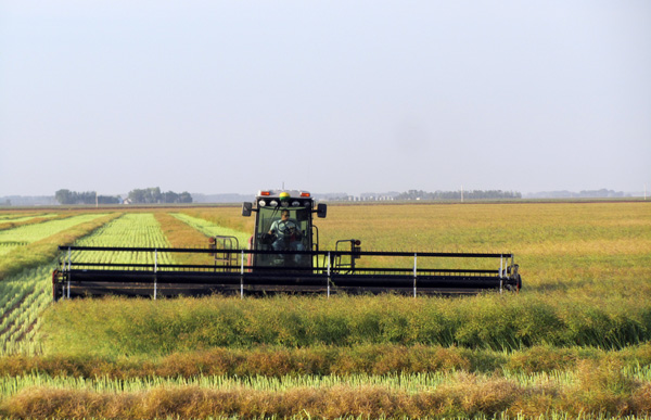 Less Canola, More Wheat In 2018