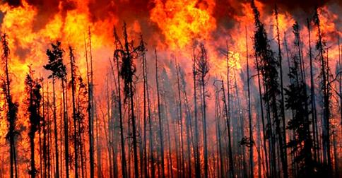 Fires in the Prince George Fire Centre