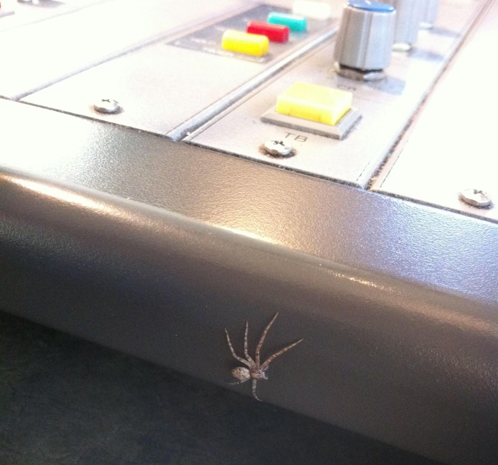 My Spider Friend