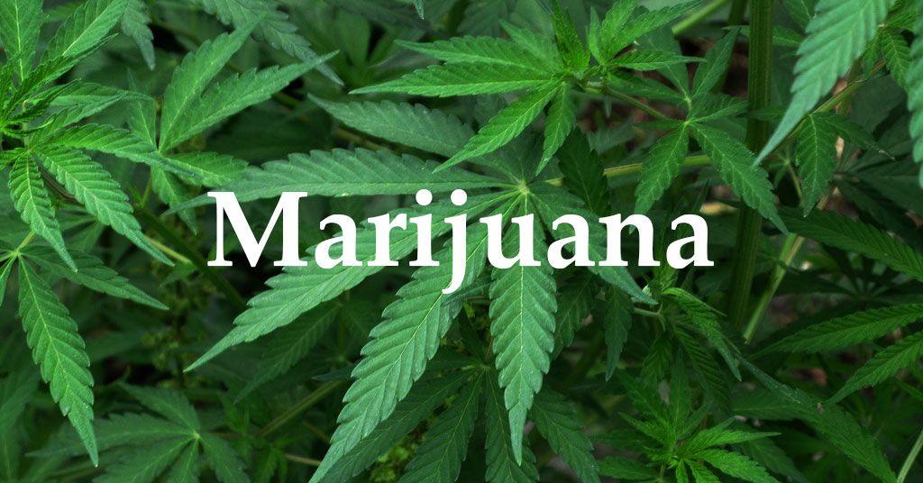 U.P. Prosecutors, Police Oppose Marijuana Proposal