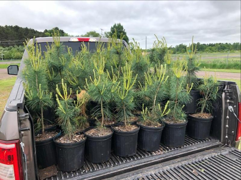 5,500 Trees To Be Planted In 8 U.P. Communities