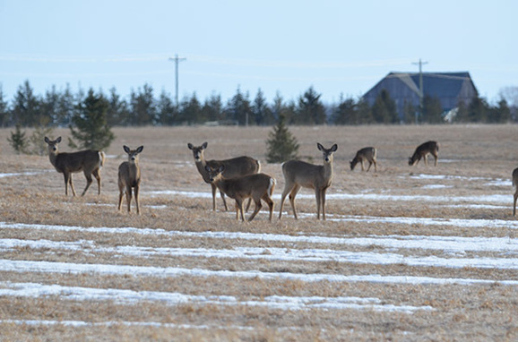 Surveillance Efforts Continue For CWD In Deer