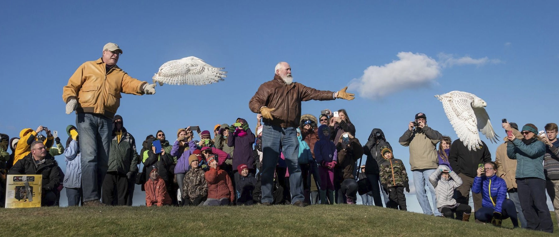 Snowy Owl To Be Released Sunday In Marquette