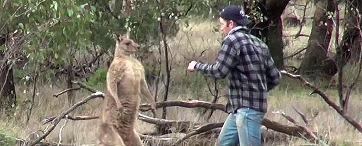 VIDEO: Man Punches Kangaroo