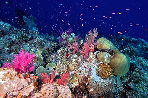 Underwater HOTEL?!