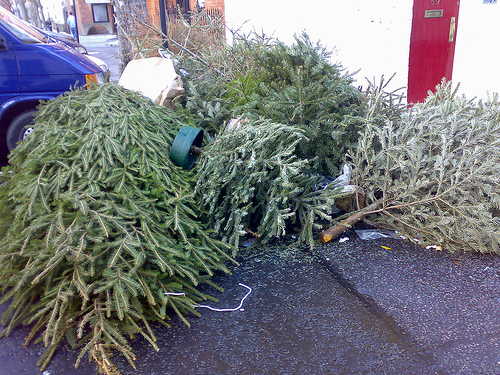 Recycle Your Christmas Tree At Home