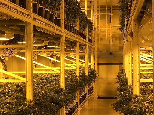 """Organigram Trying To Keep Up With """"Incredible"""" Cannabis Demand"""