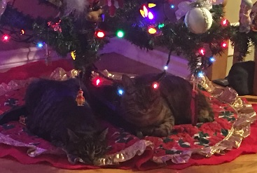 Plan First Before Adopting A Pet For Christmas