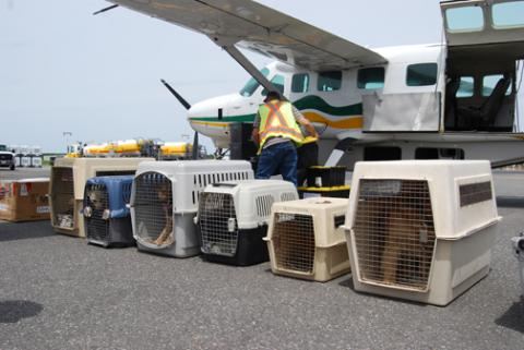 OSPCA Transfers 59 Northern Dogs
