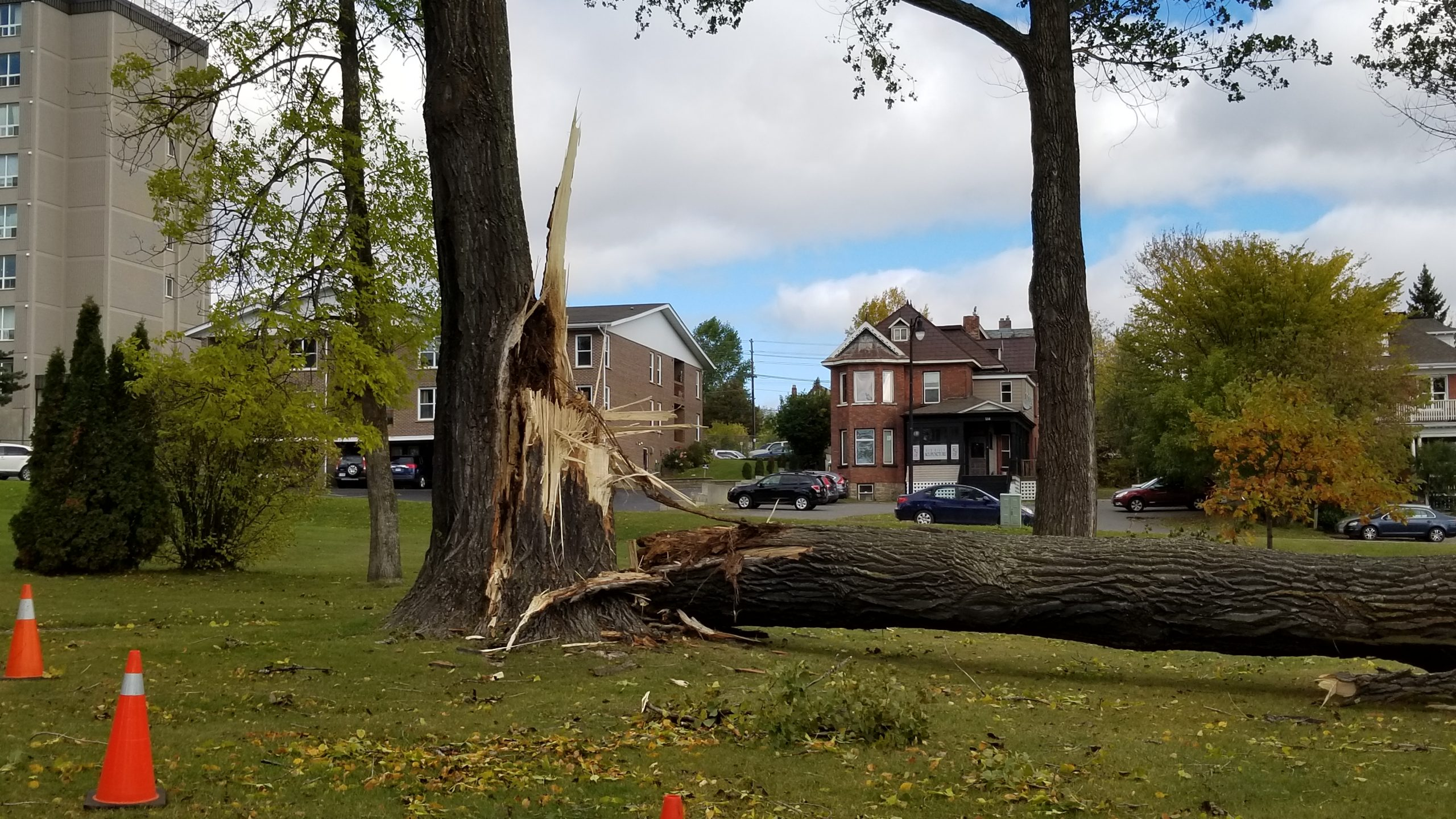 Waverley Park Tree Damaged By Wind