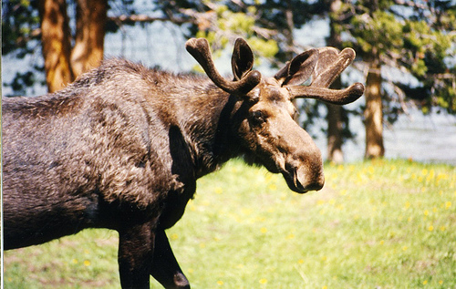 Moose Tag System Under Review
