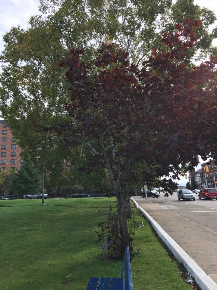 City Hosts Tree Planting Today