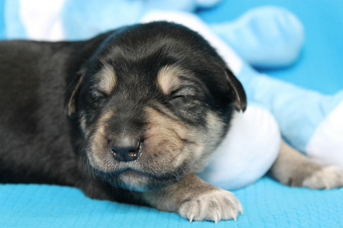 OSPCA Looking For Man Selling Puppies