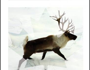 More Work Needed On Caribou Population