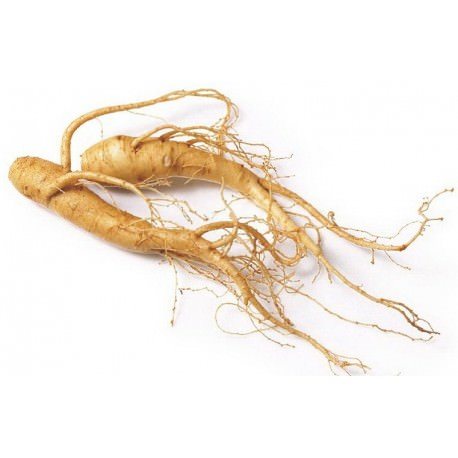 Comments Open for Special Registration of Ginseng Fungicide