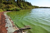 Winnebago County Warns Lake Users About Blue-Green Algae