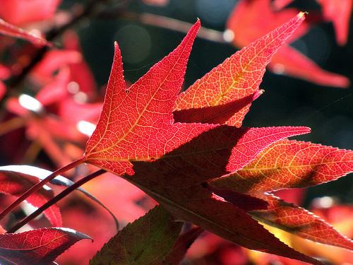 City of Manitowoc Announces Leaf Pickup Dates