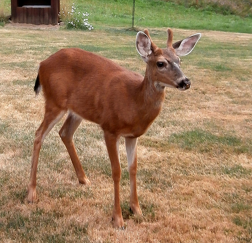 CWD spreads on deer and elk farms