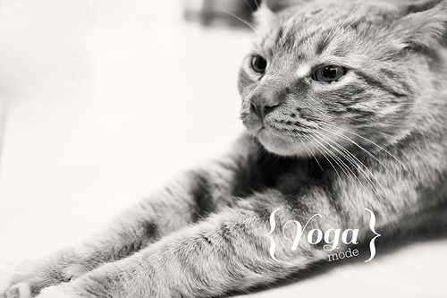 Manitowoc Public Library Hosting Cats on Mats Yoga Event