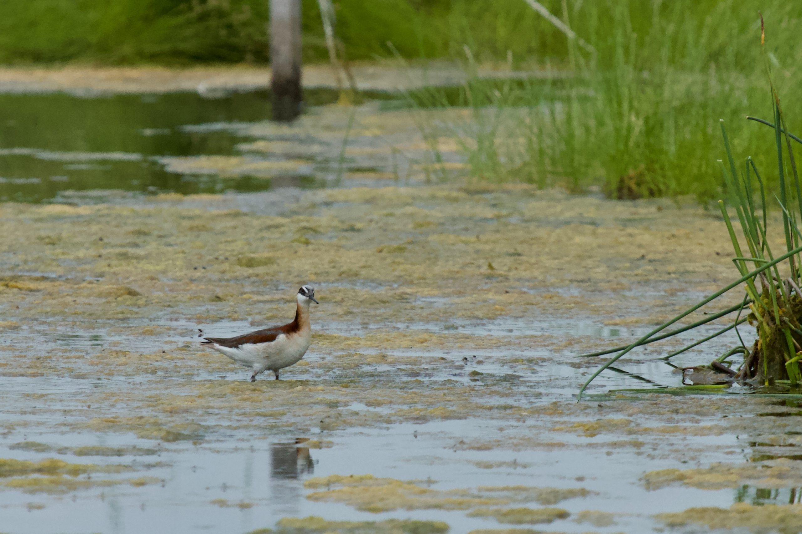 Ripples from the Dunes: Surveying Birds